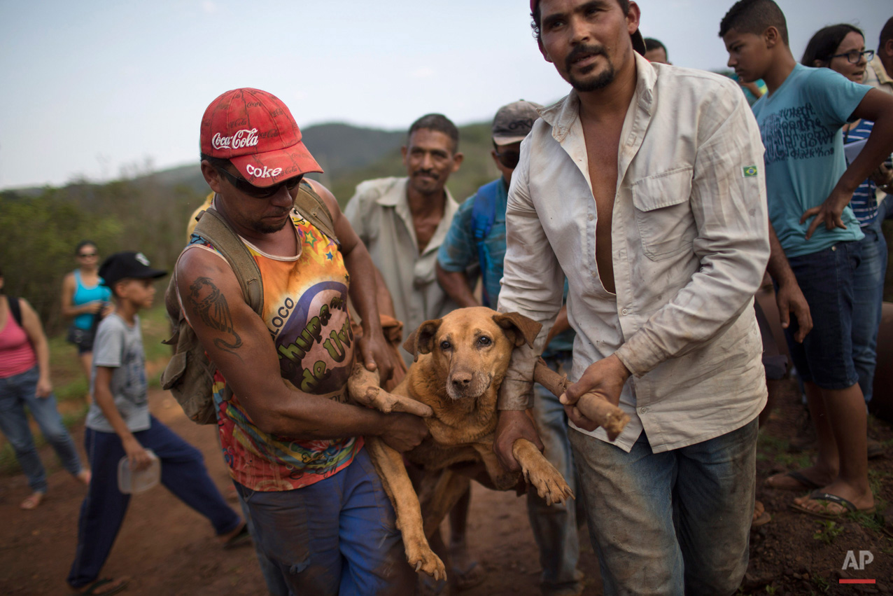 In this Nov. 7, 2015, photo, people carry an injured dog they rescued in the small town of Bento Rodrigues, which flooded after a dam burst in Minas Gerais state, Brazil. Brazilian searchers are looking for people still listed as missing following the Thursday burst of two dams at an iron ore mine in a southeastern mountainous area. (AP Photo/Felipe Dana)