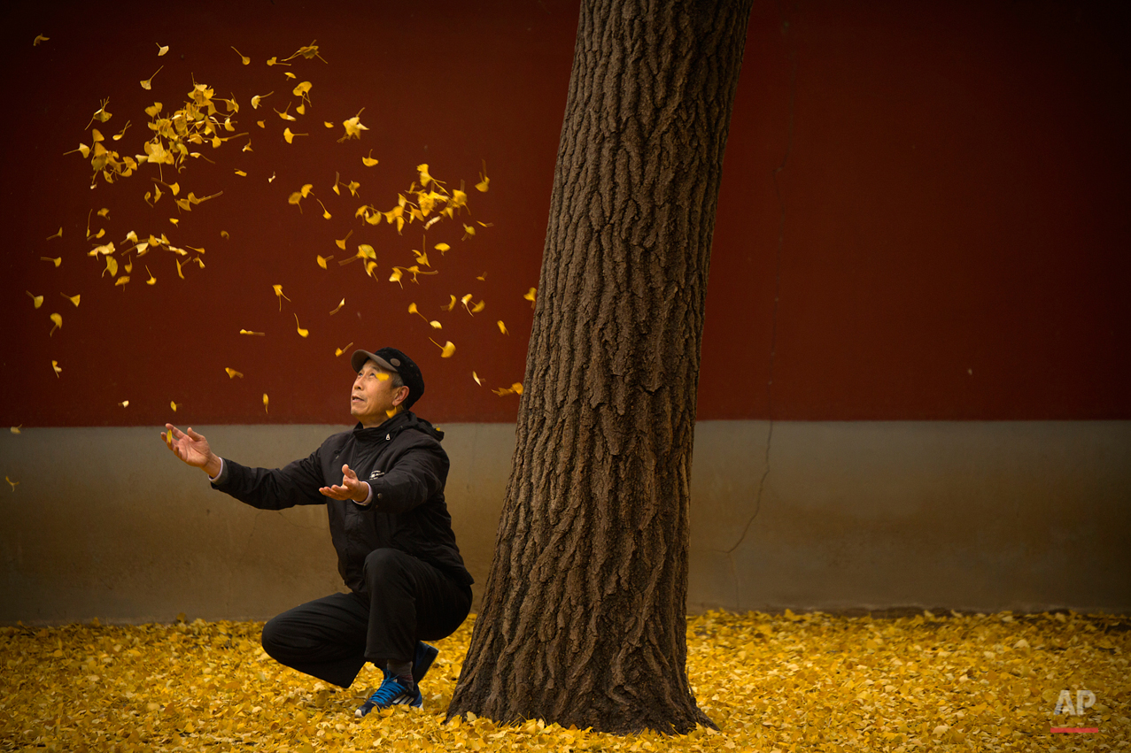 In this Friday, Nov. 20, 2015 photo, an elderly man tosses fallen gingko leaves into the air in a park in Beijing. China's capital has been hit with unusually cool and wet weather in recent weeks. (AP Photo/Mark Schiefelbein)