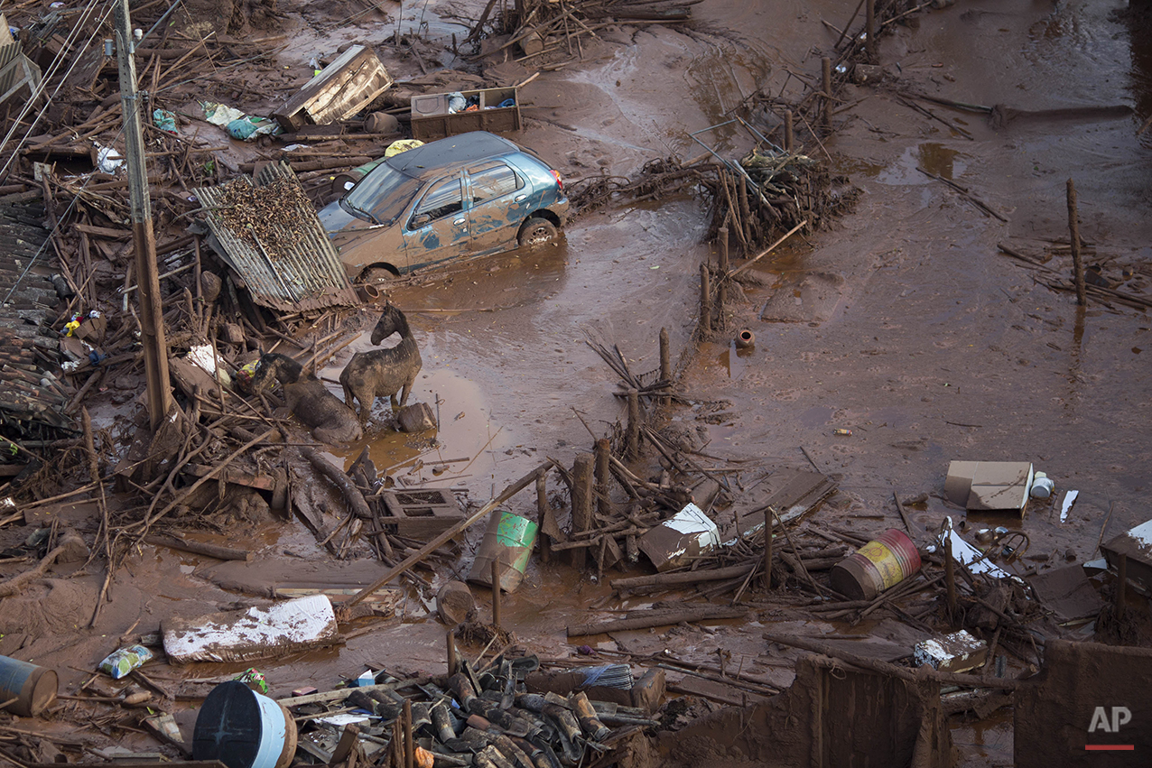 Horses struggle in the mud in the small town of Bento Rodrigues, Minas Gerais, Brazil after a dam burst on Friday, Nov. 6, 2015. Mud flowed into the village 4 miles (7 kilometers) downhill from the Samarco iron ore mine in the mountainous area. (AP Photo/Felipe Dana)