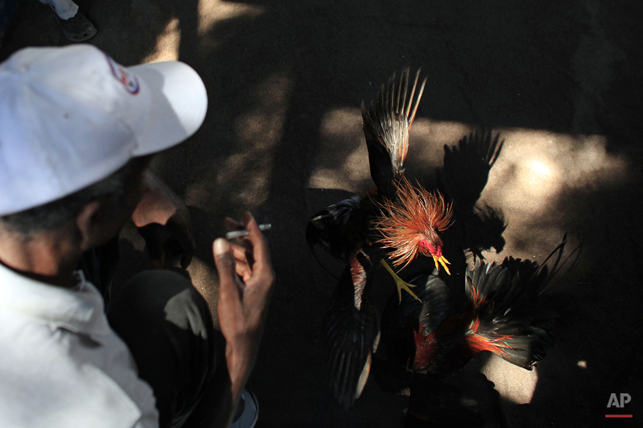 Haiti Cockfighting Photo Gallery