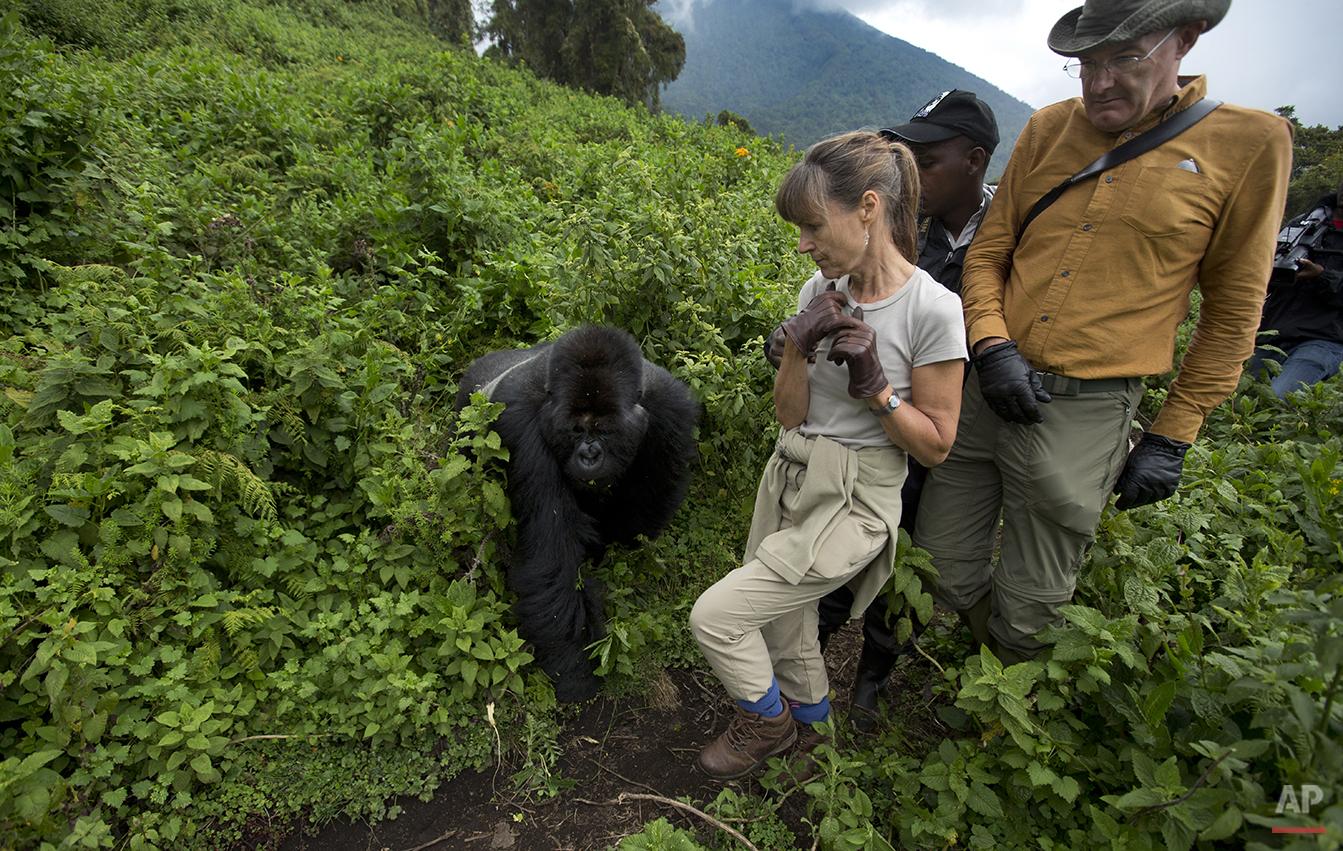 APTOPIX Rwanda Gorilla Trek