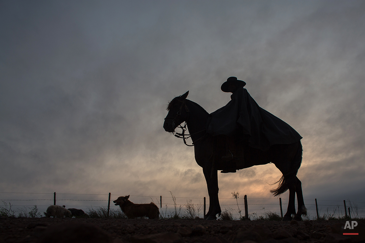 """In this Sept. 18, 2015, a """"gaucho"""" accompanied by his dog, rides his horse to go to his work at the rural area of Santa Izabel ranch, Alegrete municipality, Rio Grande do Sul, Brazil. Wearing traditional broad-brimmed hats and red neckerchiefs, their trousers tucked into soft, leather boots, the South American gauchos trot on handsome horses down the street of the small southern community. (AP Photo/Eraldo Peres)"""