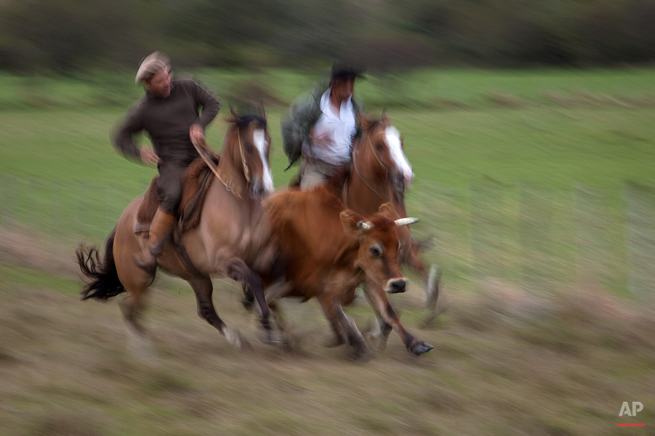 """In this Sept. 17, 2015, gauchos herd cattle at the Cabanha Escondida ranch, Alegrete municipality, Rio Grande do Sul state, Brazil. Pedro Melchiades, 23, laments that many younger gauchos no longer keep the cowboy ways, instead opting for easier jobs in bigger cities. While he says he's """"overcome that desire"""" to run away to the urban lights, he admits the cowboy life can be lonesome. Still, Melchiades notes that the annual festival """"is a good chance to appeal to the ladies."""" (AP Photo/Eraldo Peres)"""