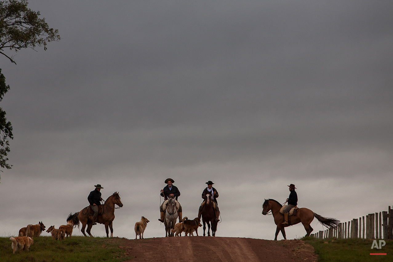 """In this Sept. 18, 2015, """"gauchos"""" accompanied by their dogs, ride their horses to go to his work at the rural area of Santa Izabel ranch, Alegrete municipality, Rio Grande do Sul state, Brazil. During """"Semana Farroupilha,"""" or """"Ragamuffin Week"""" in this enclave of 75,000 people, the locals celebrate cowboy tradition and intense pride in the region's 1935 uprising over taxation against the federal government. (AP Photo/Eraldo Peres)"""