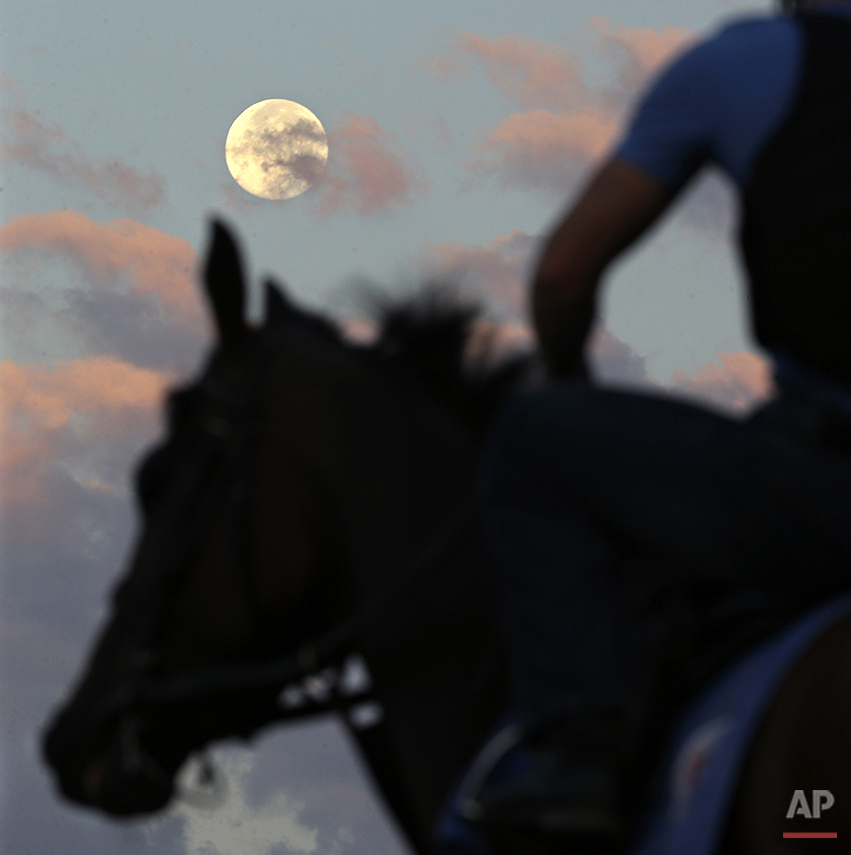 APTOPIX Haskell Horse Racing