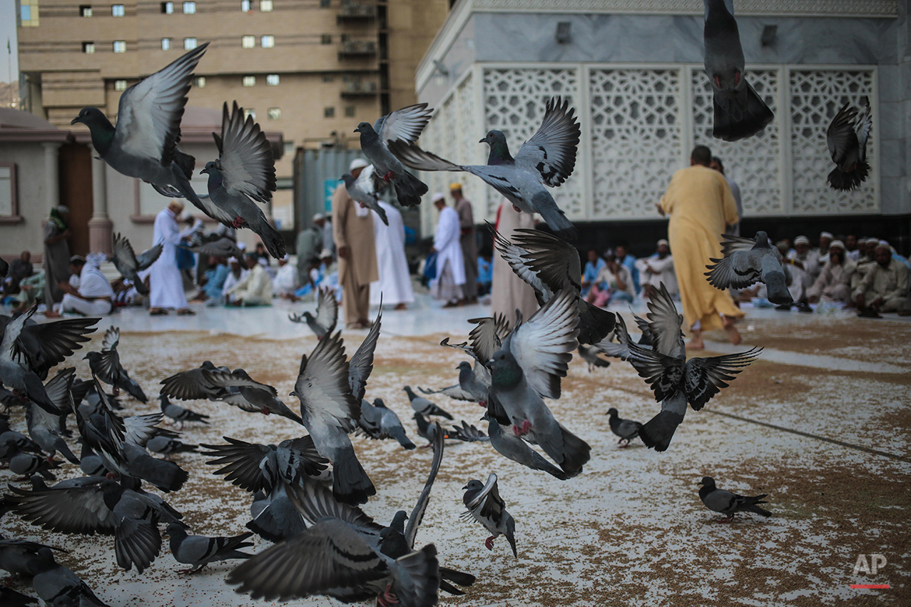 Pigeons fly around Muslim pilgrims leaving the noon prayers outside the Grand Mosque in the Muslim holy city of Mecca, Saudi Arabia, Tuesday, Sept. 15, 2015. Despite the crane accident on Friday, almost one million pilgrims have arrived ahead of the hajj, as of Tuesday. (AP Photo/Mosa'ab Elshamy)