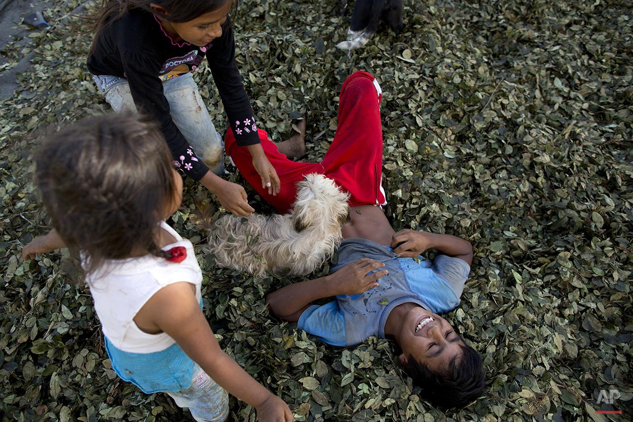 Peru Coca Farmers Photo Gallery