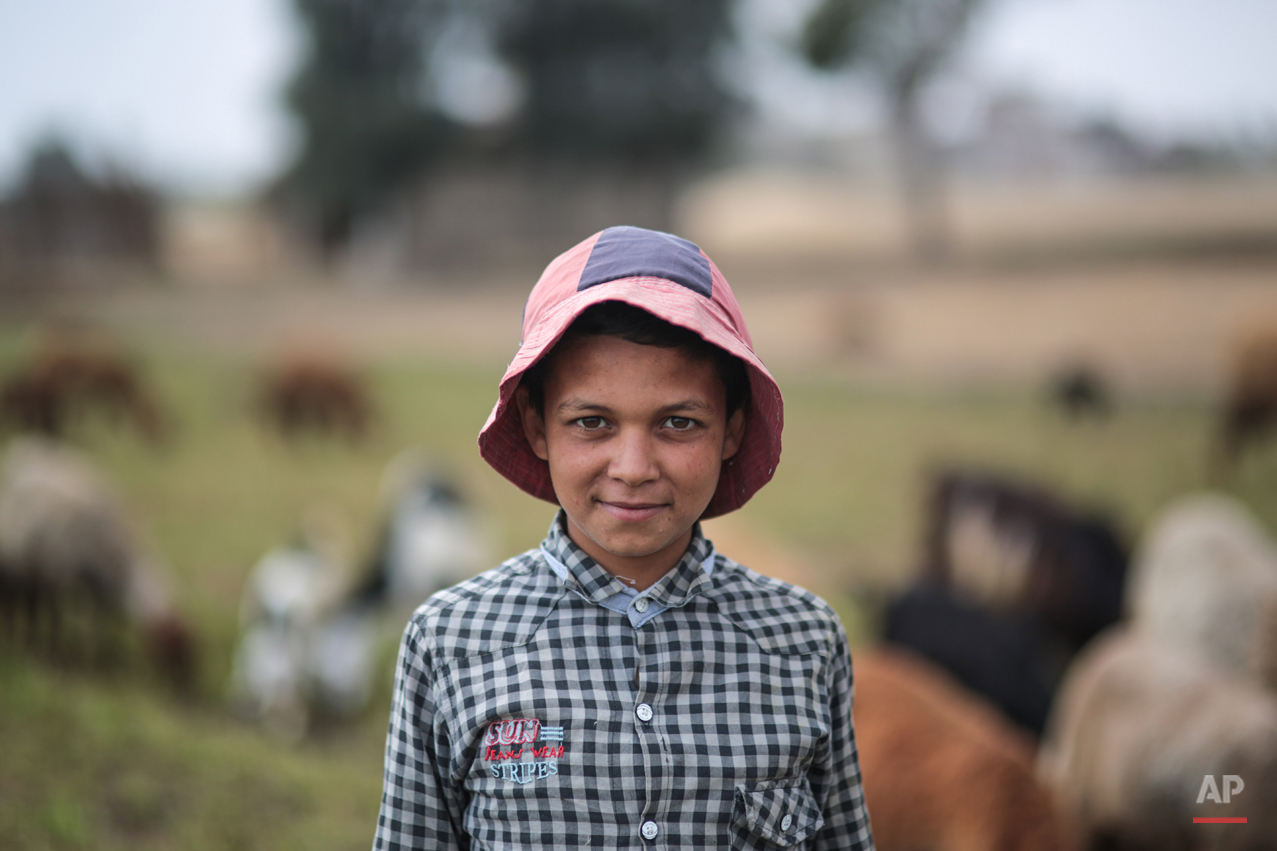 In this Thursday, May 14, 2015 photo, a young shepherd poses for a picture in his family's farm, in a village in the Nile Delta town of Behira, 300 kilometers (186 miles) north of Cairo, Egypt. Children still play among banana trees and fields as sheep graze nearby and palm trees rustle in the wind _ but such pastoral images are being pushed out by an unstoppable sprawl encroaching on the landscape. (AP Photo/Mosa'ab Elshamy)