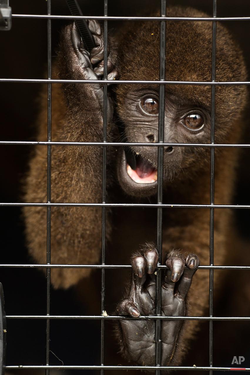 Peru Rescued Animals Photo Gallery