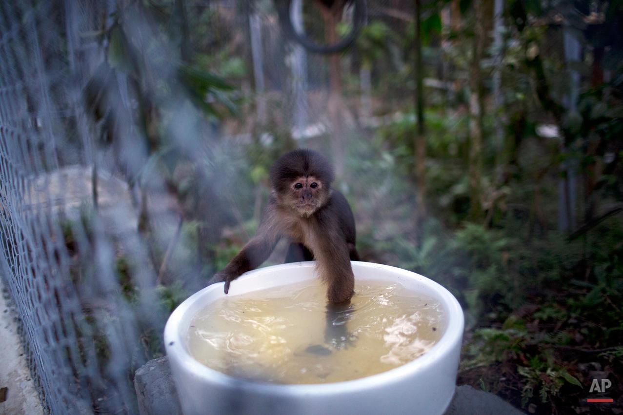 APTOPIX Peru Rescued Animals Photo Gallery