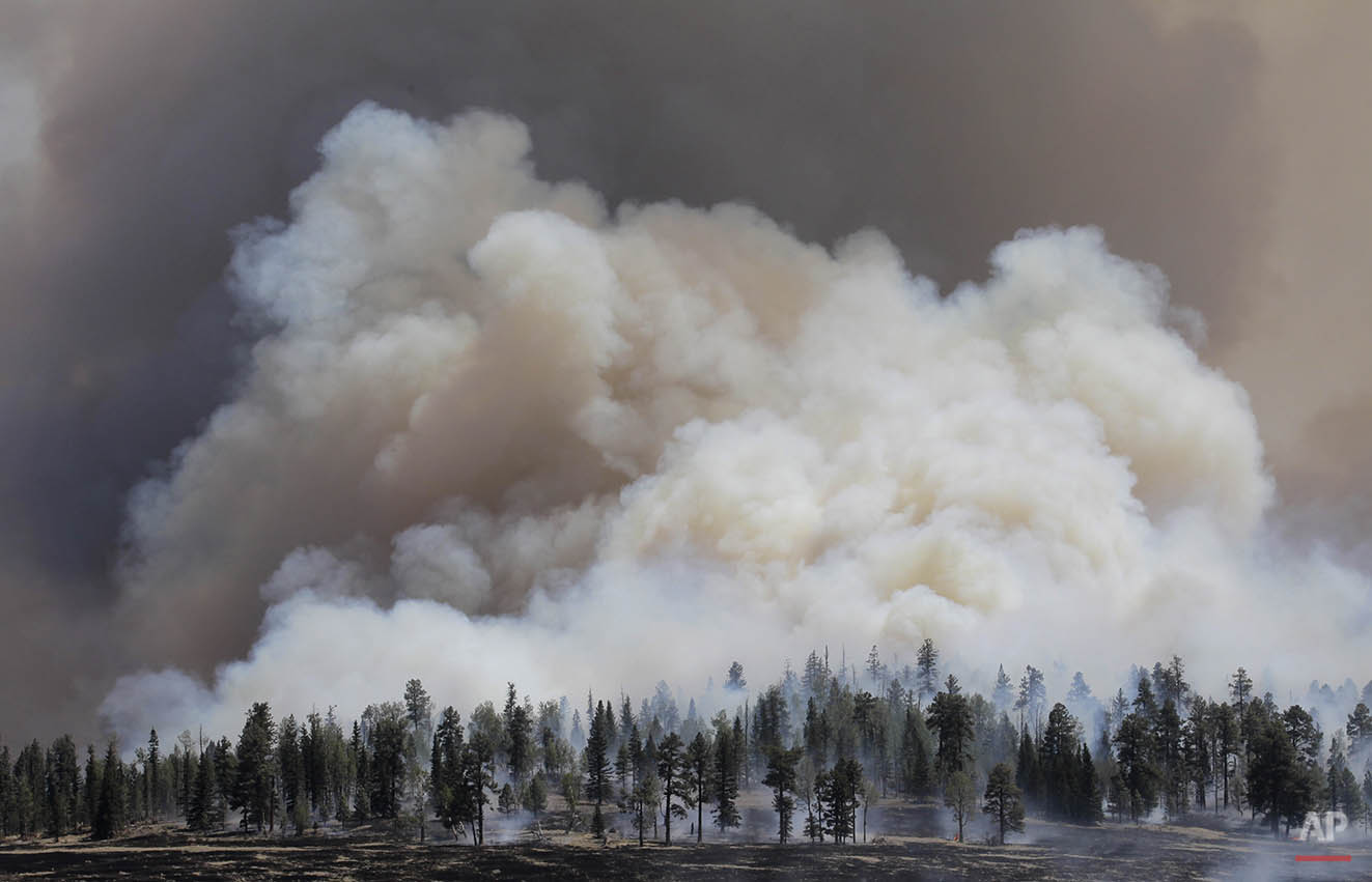 Smoke rises from a burnout fire as firefighters battle the Wallow Fire in the Apache-Sitgreaves National Forest, Ariz., Sunday, June 12, 2011. Roughly 7,000 residents of two eastern Arizona towns evacuated last week as a wildfire loomed nearby were allowed to return home Sunday as officials expressed confidence that they were making progress in their battle against the huge blaze that has been burning since May. (AP Photo/Jae C. Hong)