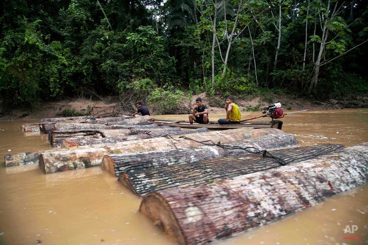 APTOPIX Peru Illegal Logging Photo Gallery