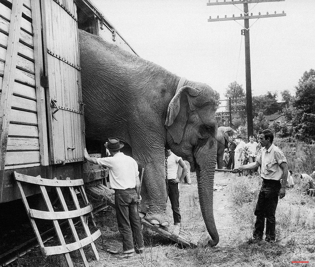 Ringling Bros Circus Elephants Photo Gallery