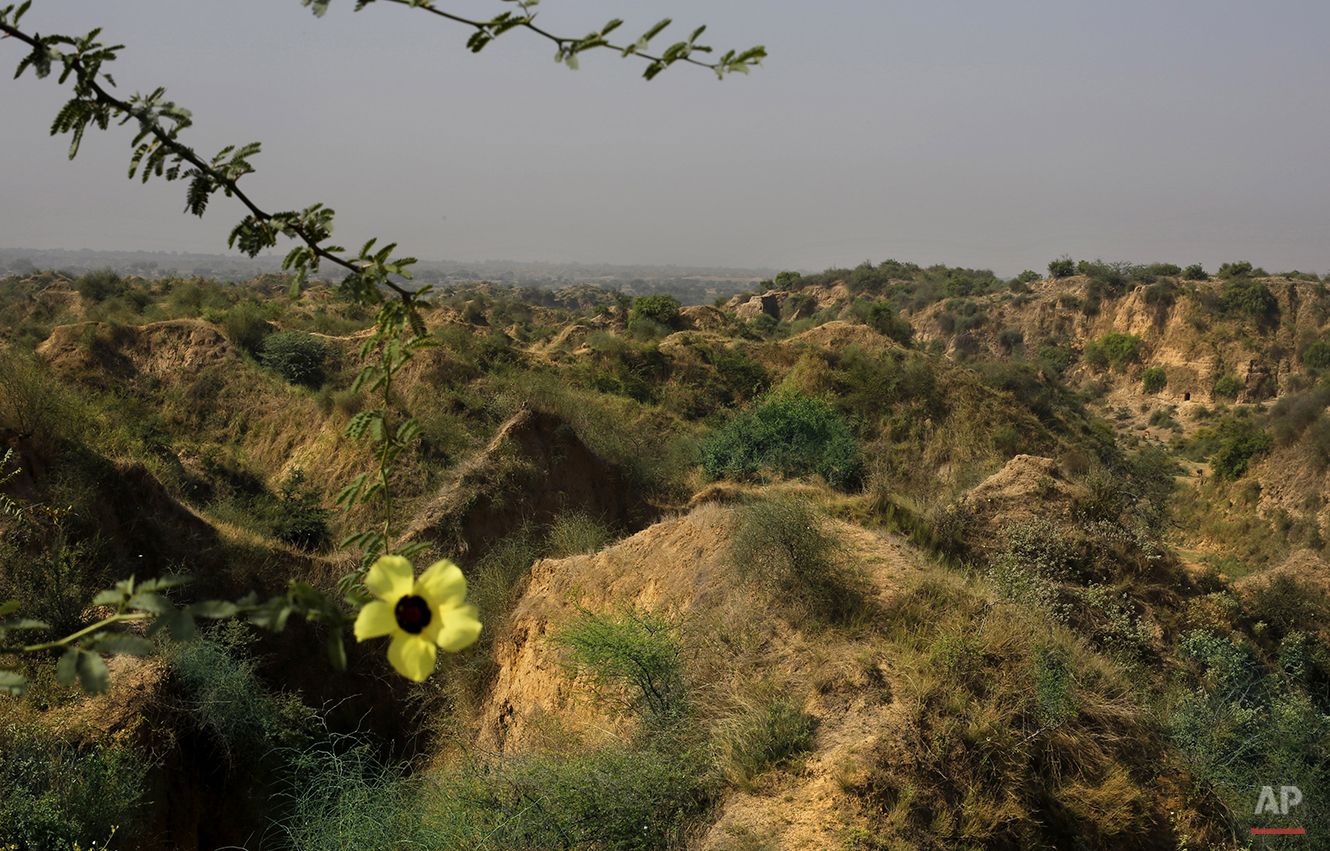 In this photo taken Tuesday, April 29, 2014, a stretch of riverside ravine is seen along the Chambal river sanctuary near Bhopepura village, in the northern Indian state of Uttar Pradesh. For hundreds of years, bandits ruled the labyrinth of scrub-filled ravines and tiny villages along the river. Spread across thousands of square miles, the Chambal badlands is a place where a dirt path can reveal a tangle of narrow valleys with 100-foot-high walls, and where a bandit gang could easily disappear. (AP Photo/Altaf Qadri)