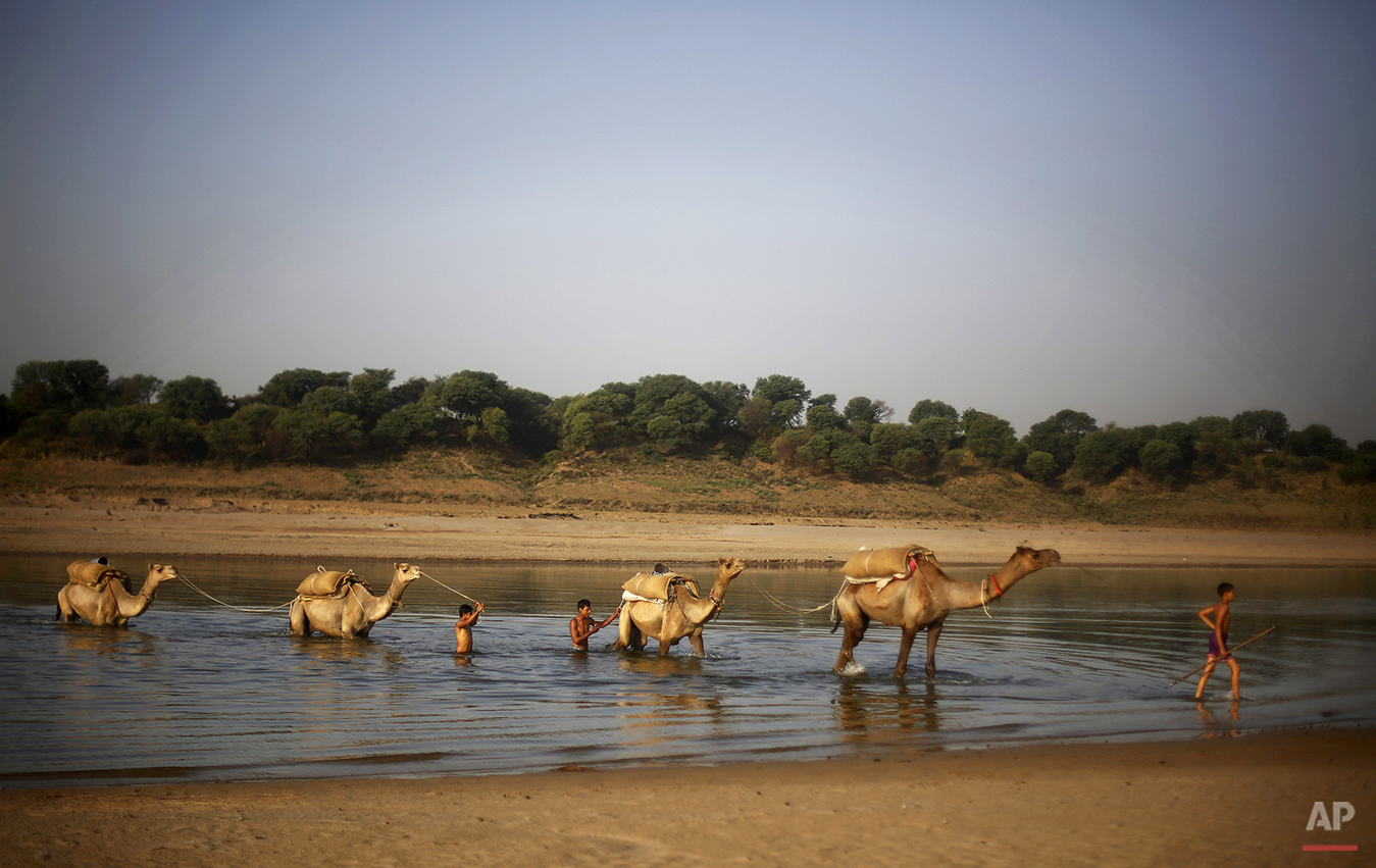 In this photo taken Tuesday, April 29, 2014, Indians lead their camels, carrying provision, across the Chambal River near Bhopepura village, in the northern Indian state of Uttar Pradesh. The fears that shaped this region go back more than a thousand years, to when sages said the Chambal (the term refers both to the river and the rugged land around it) had been cursed and villagers whispered that it was unholy. In a culture where rivers have long been worshipped, farmers avoided planting along the river's banks. (AP Photo/Altaf Qadri)