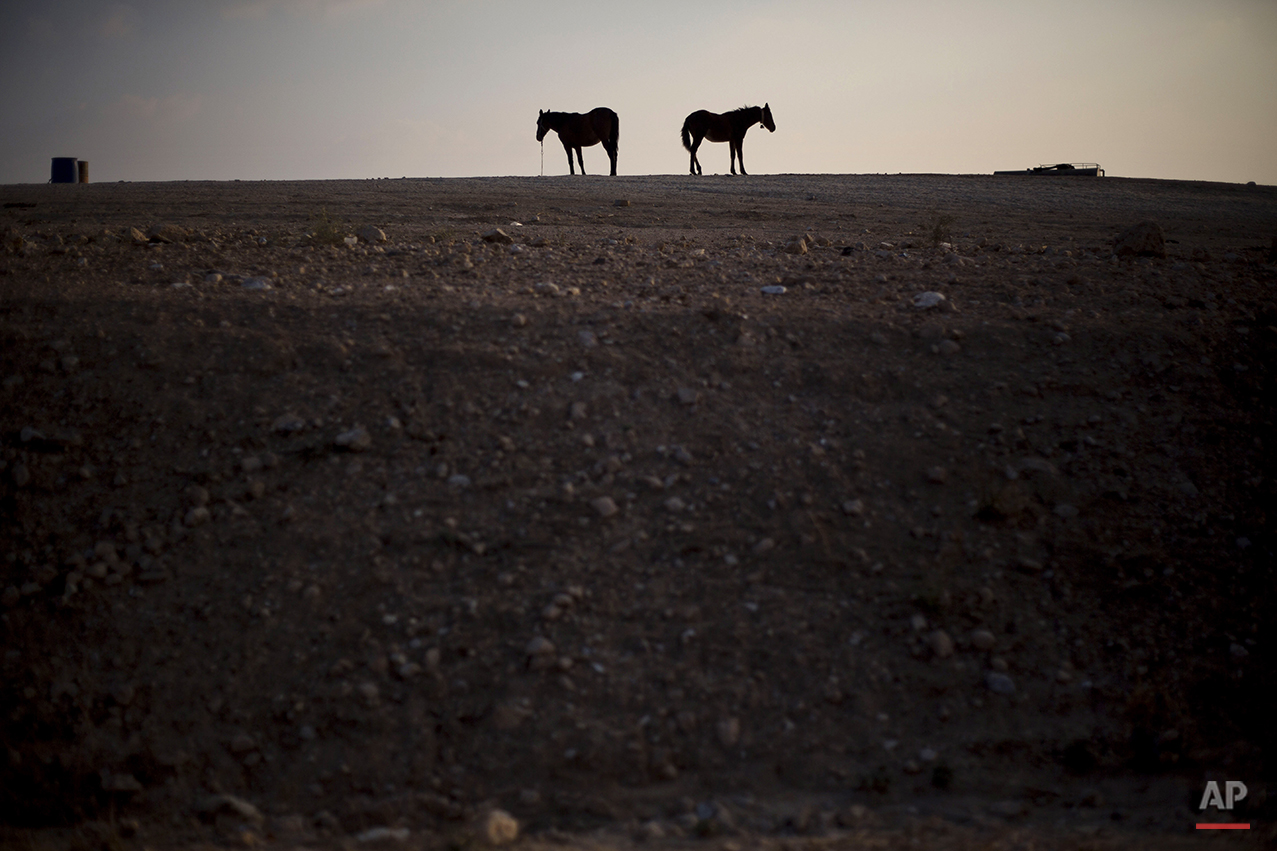 Two horses pasture near the Bedouin village of Umm al-Hiran in the Negev Desert southern Israel, Wednesday, Nov. 20, 2013. Umm al-Hiran, near the Israeli city of Beersheba, is one of three dozen destitute Bedouin communities in Israel's southern desert that authorities don't recognize. The estimated 60,000 Bedouin who live in these communities can't legally build homes and with few exceptions, the government doesn't provide them with schools, roads, garbage collection, clinics, water or electricity. (AP Photo/Ariel Schalit)