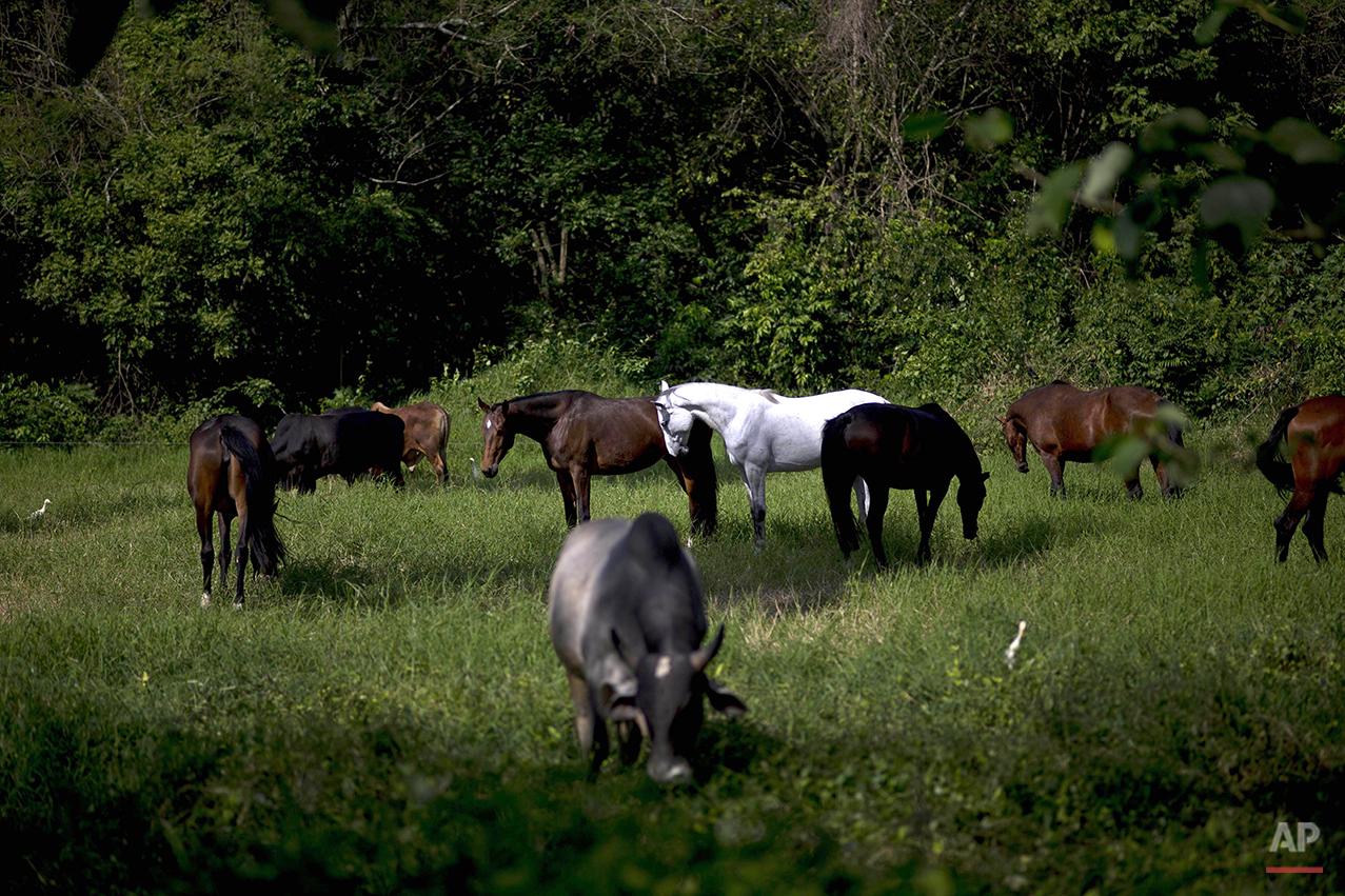 Cuba Horse Business Photo Essay