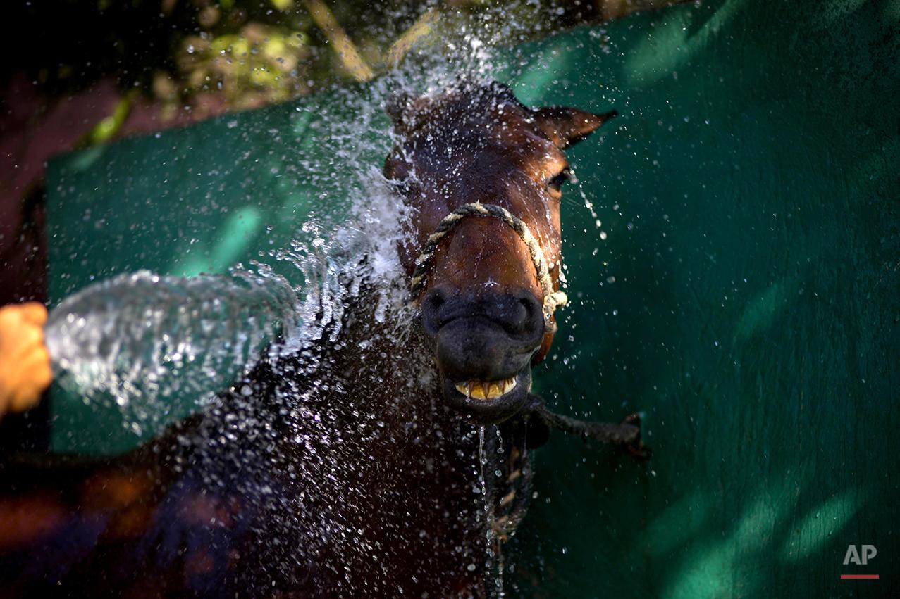 APTOPIX Cuba Horse Business Photo Essay