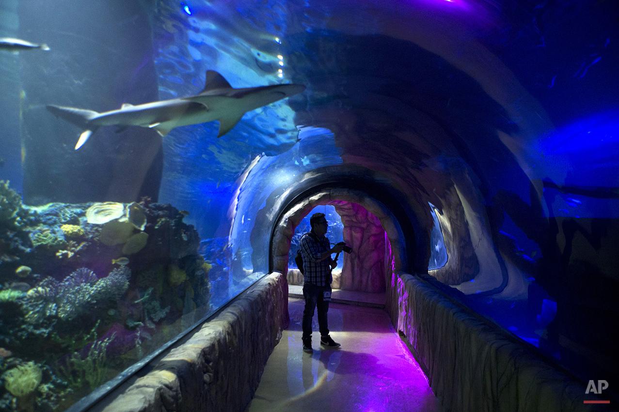 Mexico Aquarium