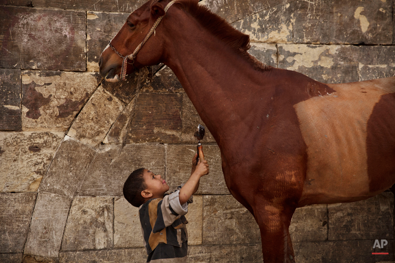Mustafa Mohamed, 5, reaches to trim a horse at his father's makeshift animal barber shop in Cairo, Egypt, March 8, 2014. The boy's father is one of Cairoís donkey barbers, a unique trade in the region, an expert in trimming and styling horses, camels, mules, sheep, goats, dogs and donkeys. (AP Photo/Maya Alleruzzo)