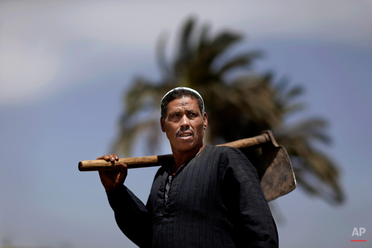 Egyptian farmer, Sayyed Abdel Nabi, 50, poses for a picture, as other Egyptian farmers harvest wheat on a farm, not pictured, in Qalubiyah, North Cairo, Egypt, Monday, May 13, 2013. Egypt's wheat crop will be close to 10 million tons this season, agriculture minister Salah Abdel Momen said, as the harvest gets underway, more than the supply minister's 9.5 million ton forecast. (AP Photo/Hassan Ammar)
