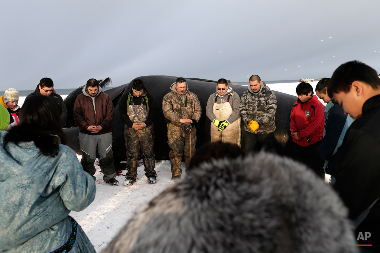 In this Oct. 7, 2014, photo, Crawford Patkotak, above center, leads a prayer flanked by his sons Josiah, in green suspenders, Arnold, in white bib, and Samuel, fourth from right, after his crew landed a bowhead whale near Barrow, Alaska. Both revered and hunted by the Inupiat, the bowhead whale serves a symbol of tradition, as well as a staple of food.  (AP Photo/Gregory Bull)
