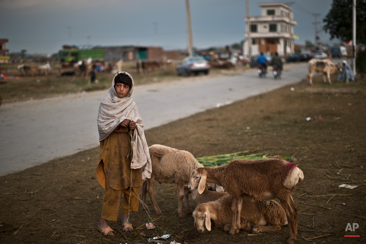An Afghan refugee stands next to sheep that he and his father haven't been able to sell, on the Muslim holiday of Eid al-Adha, or Feast of Sacrifice, on the outskirts of Islamabad, Pakistan, Monday, Oct. 6, 2014. The holiday that started  Monday in Pakistan. It commemorates the willingness of the prophet Ibrahim ó or Abraham as he is known in the Bible ó to sacrifice his son in accordance with God's will, though in the end God provides him a sheep to sacrifice instead.  On the start of the holiday Muslims slaughter sheep, cattle and other livestock, and give part of the meat to the poor. (AP Photo/Muhammed Muheisen)
