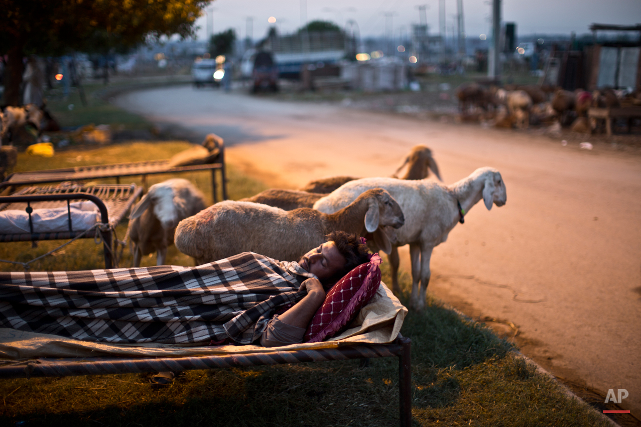 A Pakistani vendor sleeps on a bed along a street next to his sheep, on the Muslim holiday of Eid al-Adha, or Feast of Sacrifice, on the outskirts of Islamabad, Pakistan, at dawn, Monday, Oct. 6, 2014. Muslims around the world celebrate Eid to commemorate what Muslims believe was Prophet Abraham's willingness to sacrifice his son Ismail.  On the start of the holiday Muslims slaughter sheep, cattle and other livestock, and give part of the meat to the poor. (AP Photo/Muhammed Muheisen)