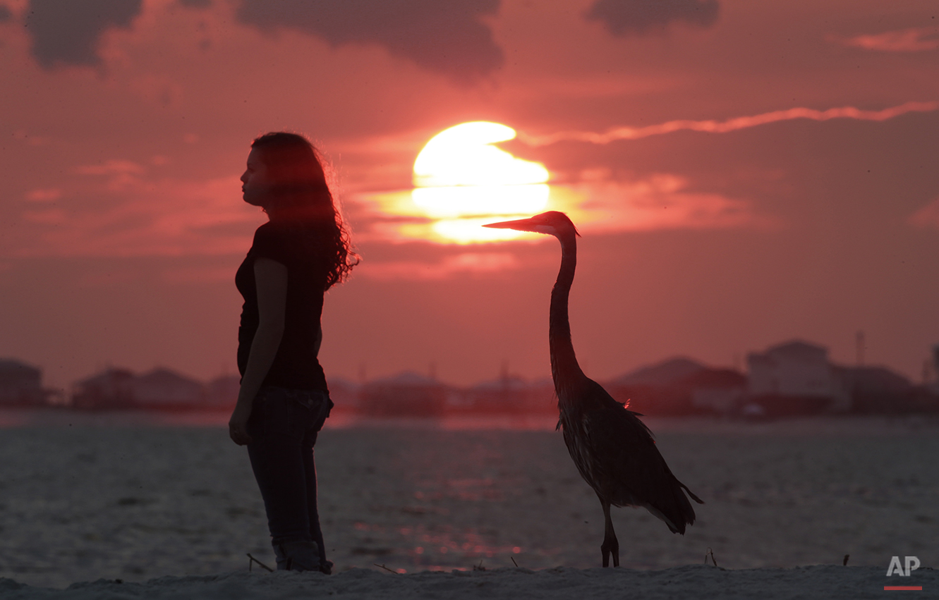 Beach visitors of different sorts watch the sunset in Dauphin Island, Ala., Wednesday, Aug. 22, 2012. (AP Photo/Dave Martin)
