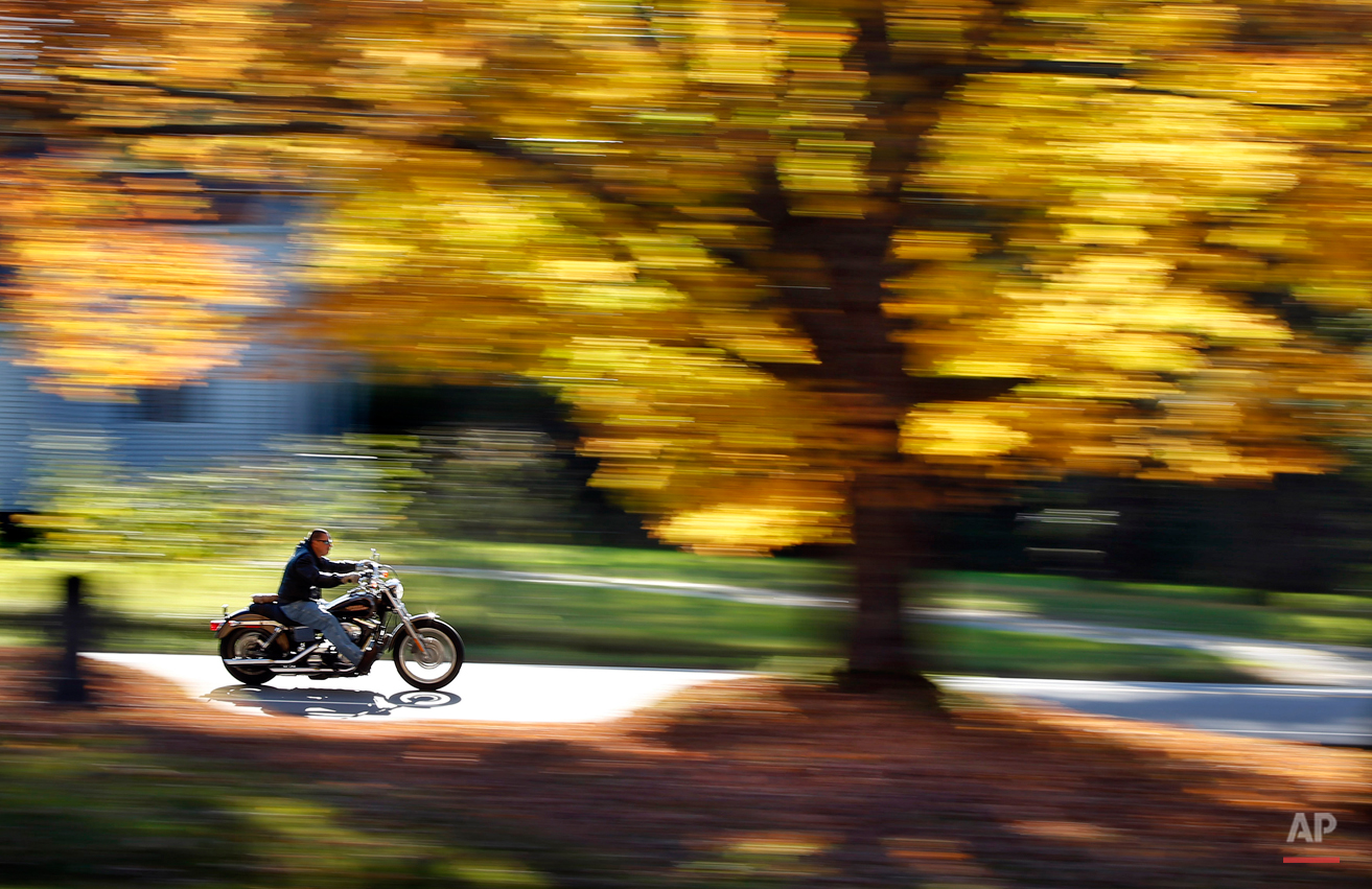 A motorcyclist cruises past a maple tree displaying its bright fall foliage, Monday, Oct. 6, 2014, in Freeport, Maine. Southern Maine should reach its peak autumn colors in the upcoming days, according to the state's fall foliage report. (AP Photo/Robert F. Bukaty)