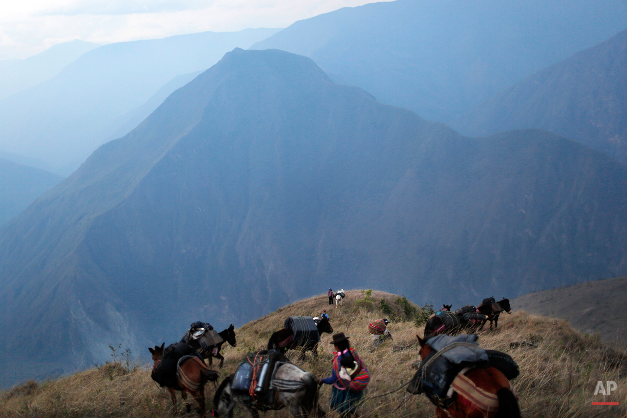 In this Sept. 3, 2014 photo, villagers leading donkeys loaded with the working tools for anthropologists, traverse a mountain pass on a journey to help forensic investigators locate the common graves of those killed in a 1984 massacre in the Paccha village of Peru. Arriving is not easy. This rugged southeastern region known as ìOreja de Perro,î or Dogís Ear, lacks telephones, grocery stores and good roads. (AP Photo/Rodrigo Abd)