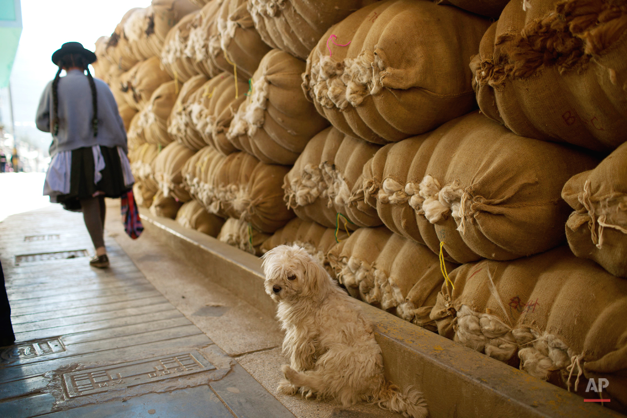 A dog sits in front of a yield of sacks filled with wool in downtown Huancavelica, Peru, Tuesday, Aug. 20, 2013. (AP Photo/Rodrigo Abd)