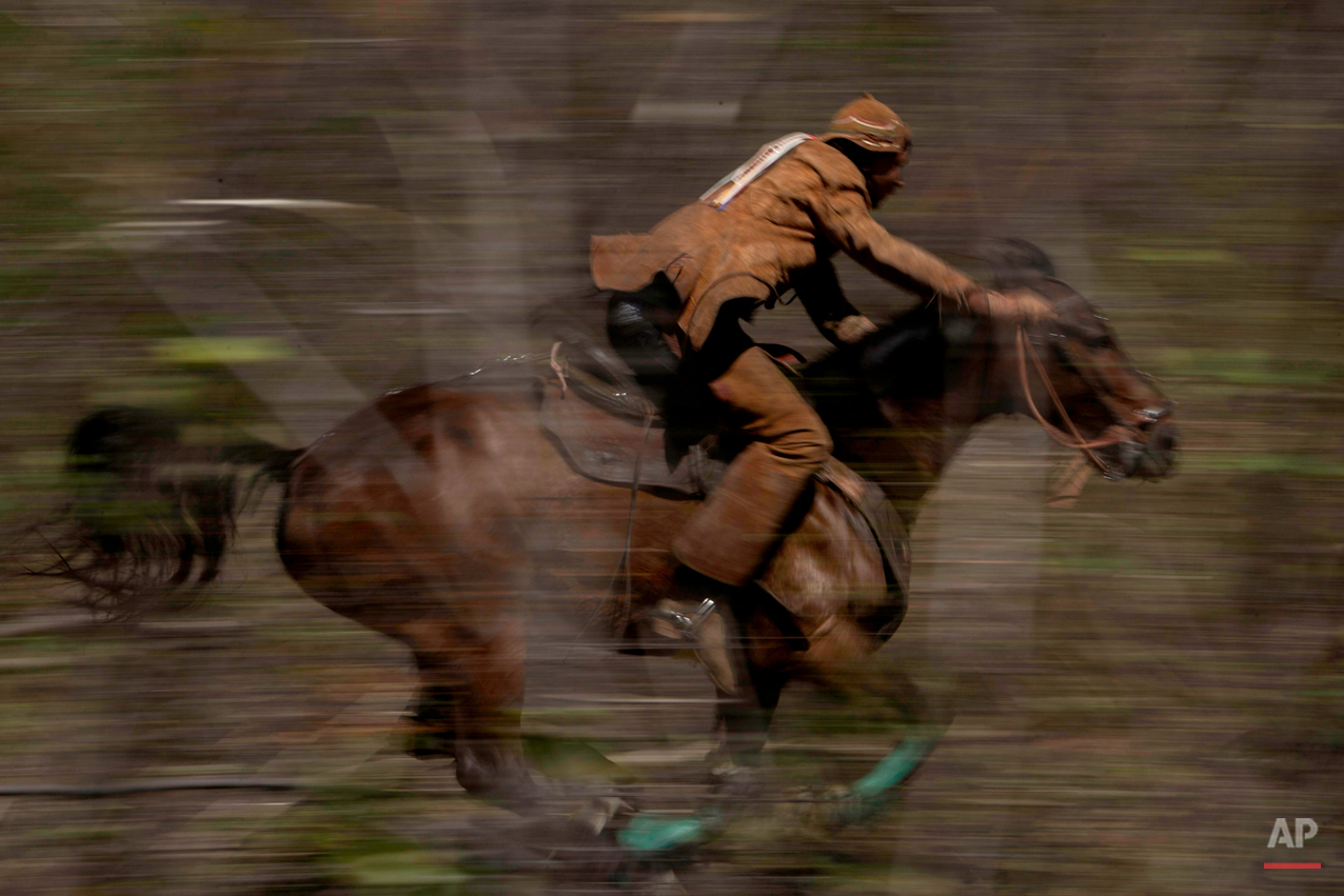"""In this July 24, 2015 photo, a cowboy gallops through the brush, chasing a bull as he competes in the annual Catch the Bull event known as """"Pega do Boi"""" in Serrita, in Brazil's Pernambuco state. The goal of the """"vaqueiro"""" is to knock the bull down by its tail, grab a leather necklace around the animal's neck and deliver it to the judge as fast as he can. Cowboys work in teams of two. (AP Photo/Eraldo Peres)"""