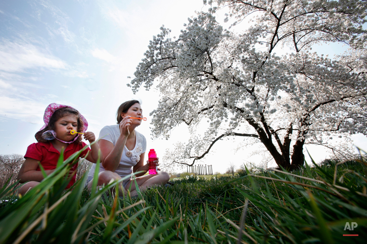 Clara Loiter, 3, and her mother Jennifer Frericks, of Washington, blow bubbles under a Yoshino cherry blossom tree at the National Arboretum in Washington, Monday, March 19, 2012, with unseasonably warm March temperatures continuing. The National Capitol Columns, from the East Portico of the Capitol are in the background. (AP Photo/Jacquelyn Martin)