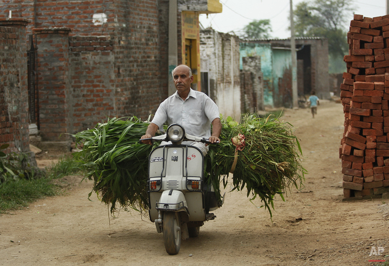 In this Thursday Aug. 20, 2015, photo, an Indian villager carries grass for cattle on a scooter near India Pakistan international border at Ranbir Singh Pura 36 kilometers (22.5 miles) from Jammu, India. On the face of it these villages in the Jammu region of Indian Kashmir seem idyllic, but over the last two weeks these villages have been witness to an angry exchange of fire and mortar shells between Indian and Pakistani soldiers. This isn't the first time that these villages have borne the brunt of the animosity between India and archrival Pakistan. And this likely won't be the last. (AP Photo/Channi Anand)