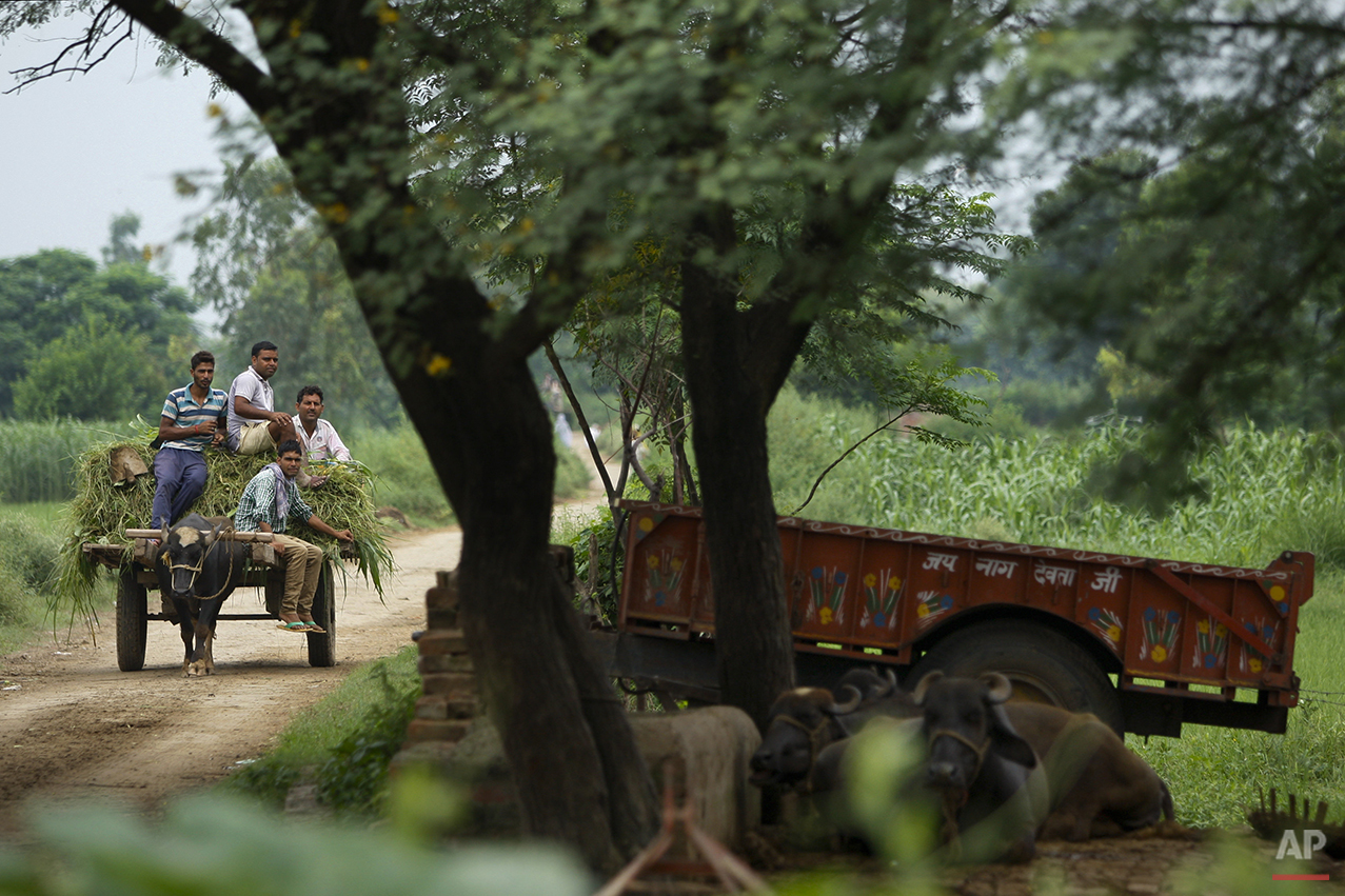 In this Friday Aug. 21, 2015, photo, Indian villagers ride on a buffalo cart  near the India Pakistan international border at Ranbir Singh Pura 36 kilometers (23 miles) from Jammu, India. On the face of it these villages in the Jammu region of Indian Kashmir seem idyllic, but over the last two weeks these villages have been witness to an angry exchange of fire and mortar shells between Indian and Pakistani soldiers. This isn't the first time that these villages have borne the brunt of the animosity between India and archrival Pakistan. And this likely won't be the last. (AP Photo/Channi Anand)