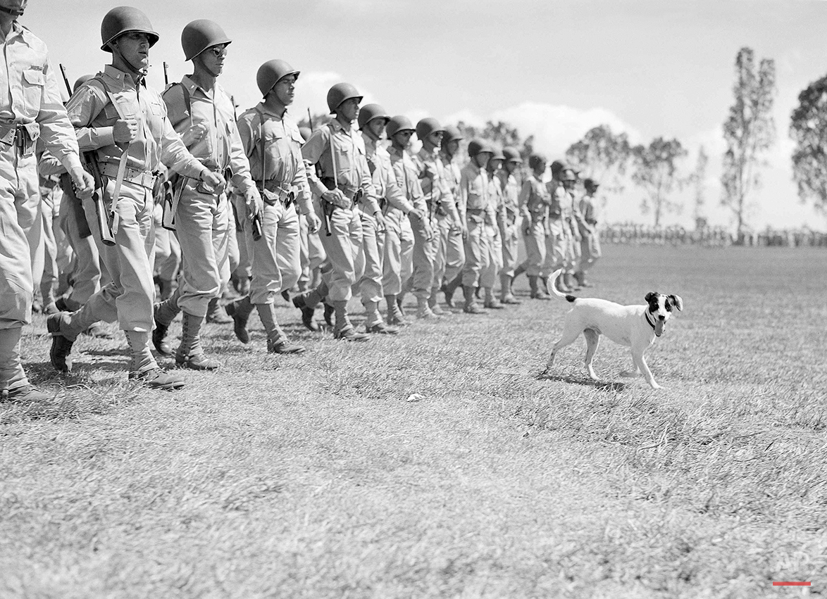 """This dog who fell in line during a review of the oldest U.S. Army division with a continuous history, appears to be having a good time stepping along briskly, somewhere in the Central Pacific on Sept. 29, 1943. The review celebrated the division's """"Organization Day."""" (AP Photo/Pool)"""