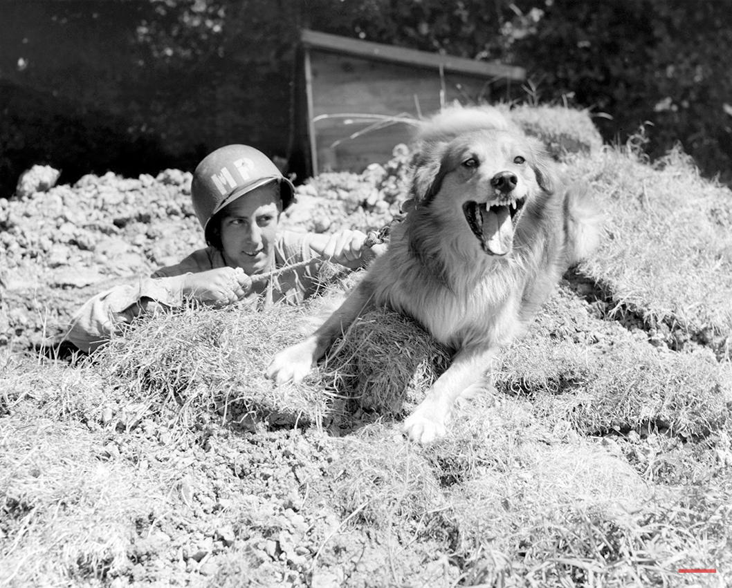 """Pfc. Robert F. Young, of 805-2nd St. Lancaster, Ohio, peers from a foxhole behind his collie dog """"Trix"""", on alert in Normandy, France, August 20, 1944. """"Trix"""" is one of the U.S. Army Military Police dogs trained to guard restricted areas, airports and various dumps of the 9th Air Force service command. The M.P. Dogs are also rained to hunt snipers. Each dog has its own master. (AP Photo)"""