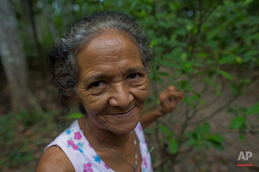 In this June 22, 2016 photo, Godmother Alda Figueira stands in a plantation of Chacrona (Psychotria viridis) used to make an ancient psychedelic tea locals know as the Holy Daime in Ceu do Mapia, Amazonas state, Brazil. The Cult of the Holy Daime was started in 1930 by a descendant of slaves. People here believe the drink heals the body and expands the mind. (AP Photo/Eraldo Peres)