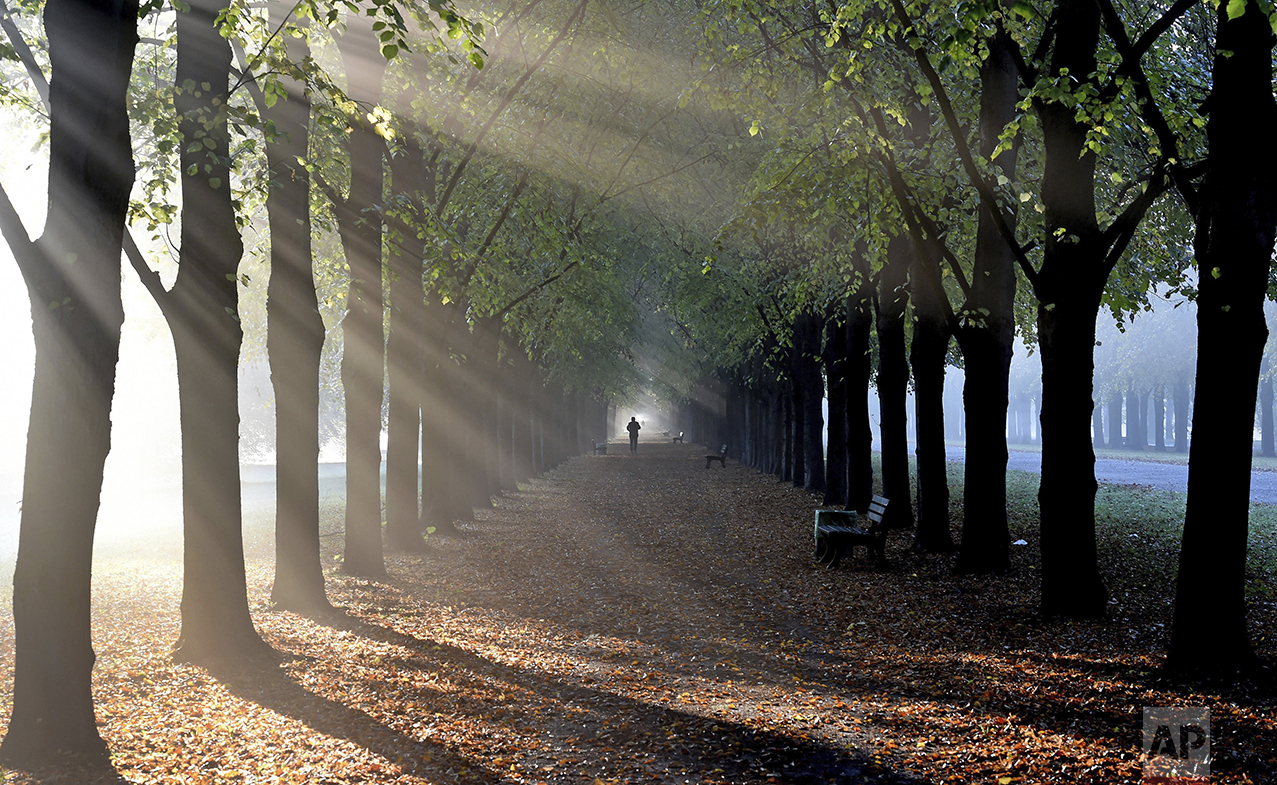 A pedestrian walks between a row of linden trees in the early morning mist at the Georgengarten in Hannover, northern Germany, Tuesday, Oct. 18, 2016. (Holger Hollemann/dpa via AP)