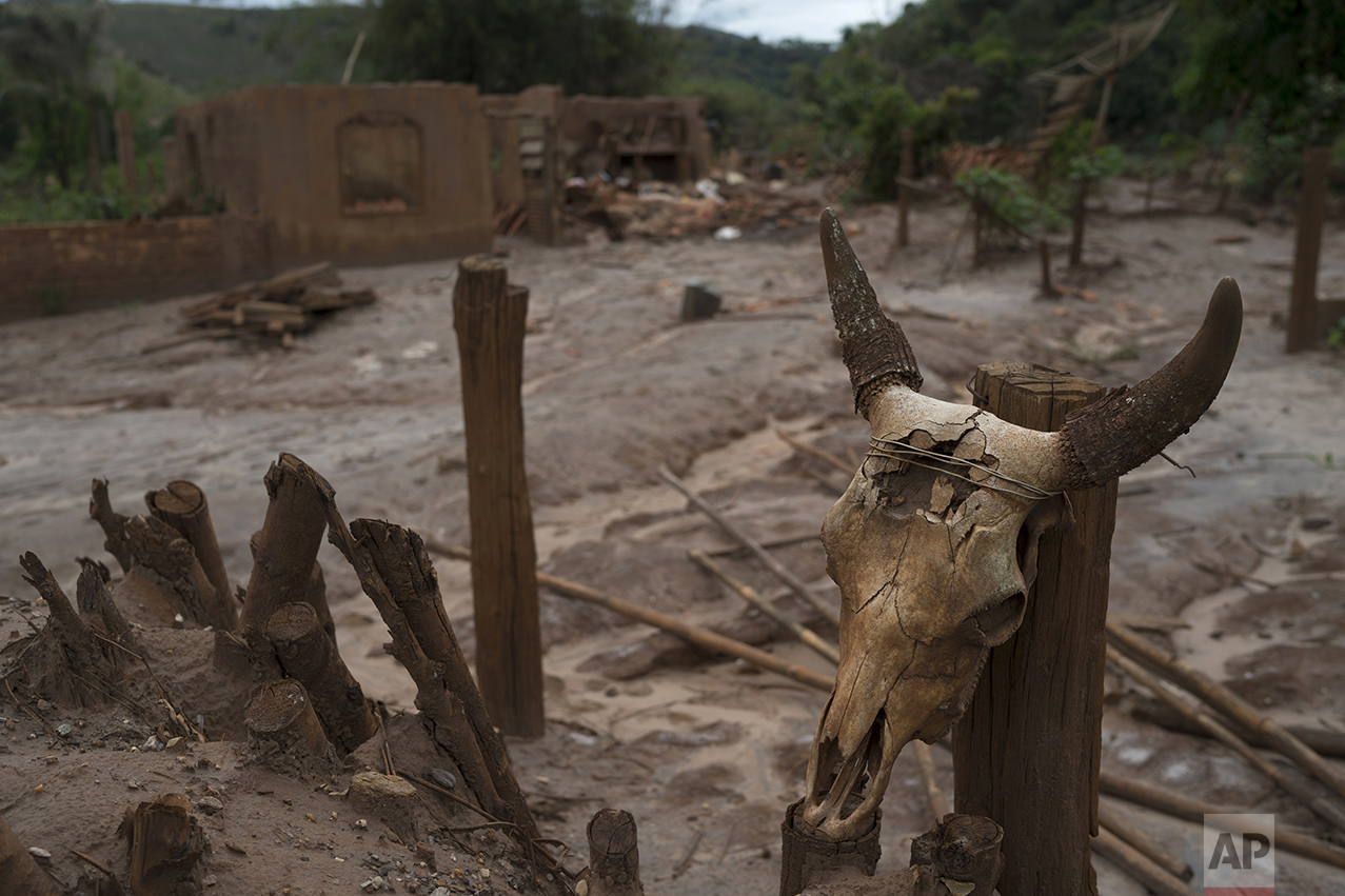 This Oct. 13, 2016 photo shows a cow skull wired to a fence post in front of a hamlet destroyed by a mudslide triggered by the Nov. 5, 2015 failing of a dam holding back a giant pond of mine waste, in Paracatu, Brazil. Most residents are still waiting for he company behind the tragedy, Samarco, to pay for their lost possessions and build new towns for them. (AP Photo/Leo Correa)