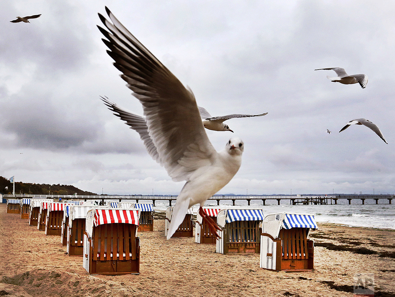 Sea gulls fly over beach chairs at the beach of the Baltic Sea in Timmendorfer Strand, on Oct. 22, 2016. (AP Photo/Michael Probst)