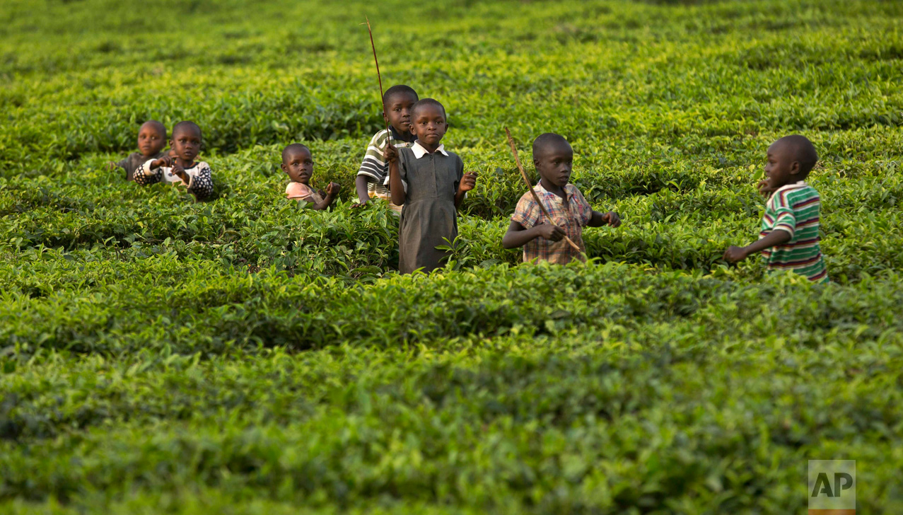 In this Thursday, Jan. 28, 2016 photo, children enjoy the last light of the day as they play together in fields of tea bushes in the village of Arwos, in western Kenya. (AP Photo/Ben Curtis)