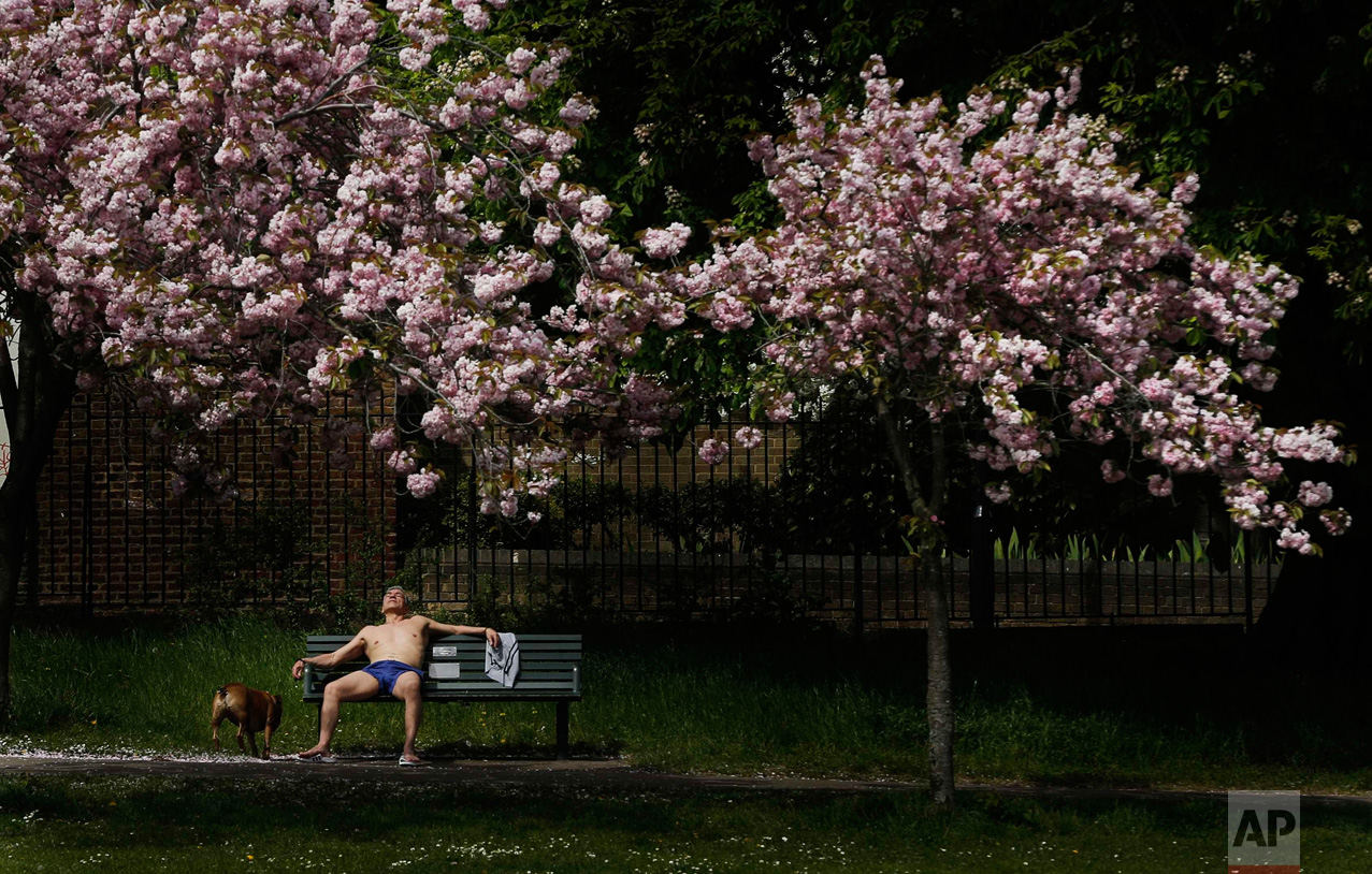 In this Friday, May 6, 2016 photo, a man enjoys the sunny and warm weather with his dog in a park in London. Weather forecast predicts up to 25 Celsius (77F) for the upcoming weekend in London. (AP Photo/Frank Augstein)