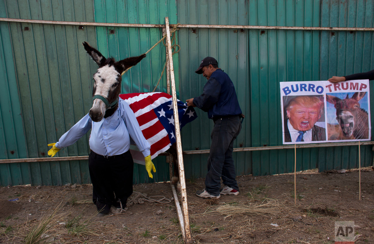 In this May 1, 2016 photo, a man dresses a donkey to resemble Donald Trump in preparation for the costume competition at the annual donkey festival in Otumba, Mexico state, Mexico. The donkey was later adorned with a blond wig and eyebrows. None of the Trump entrants won much favor with the audience at the 51st annual donkey fest. (AP Photo/Rebecca Blackwell)