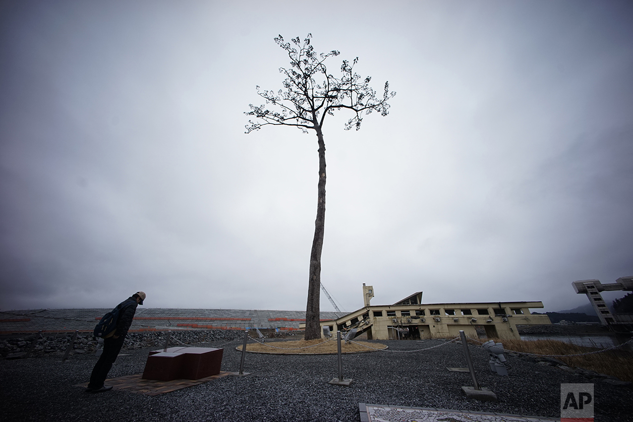 In this March 6, 2016, photo, the lone pine tree that miraculously survived the deadly 2011 tsunami among 70,000 trees along the coastline, stands in Rikuzentakata, Iwate Prefecture, northeastern Japan. The tree, which was badly damaged from seawater after surviving the tsunami, was cut down in 2012 and treated for decay after which it was preserved using artificial materials. It was later placed back where it was found to stand as a symbol of hope and survival. Japan on Friday, March 11 marked the fifth anniversary of the powerful earthquake and subsequent tsunami that hit Japan, swallowing coastal villages, leaving more than 18,000 people dead or missing and devastating large swaths of the country's northeastern coastal area. Some places are still unlivable and require massive reconstruction to restore infrastructure, houses and people's lives. (AP Photo/Eugene Hoshiko)