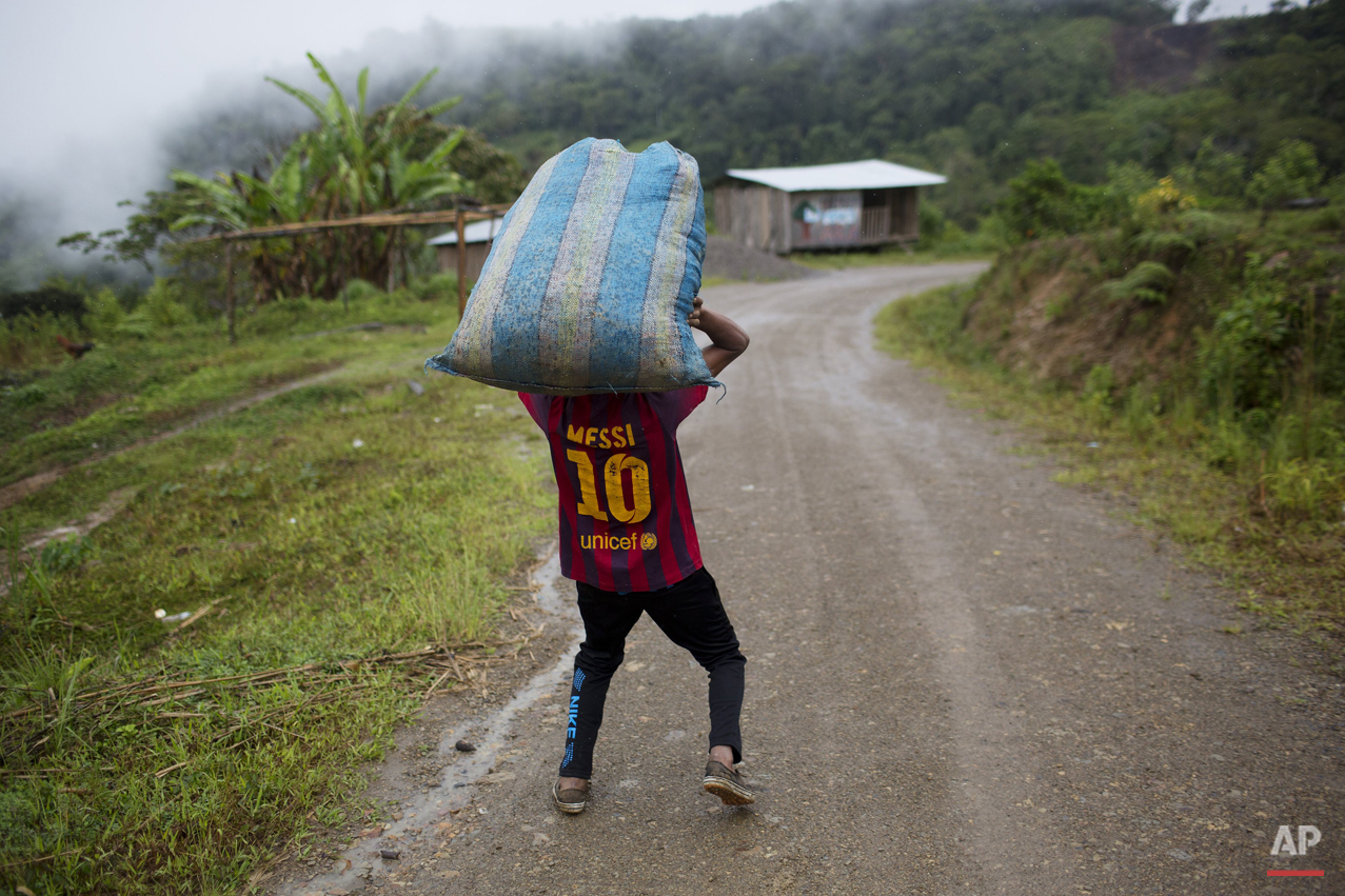 "In this March 16, 2015 photo, Jhorlis Huallpa, 17, carries tarpaulins to dry coca leaves after their harvest in La Mar, province of Ayacucho, Peru. Peru's cocaine trade is highly decentralized, run by scores of ""firms"" of extended families. The backpackers they hire move in groups as small as four and as large as 70, say police, backpackers and local officials. (AP Photo/Rodrigo Abd)"