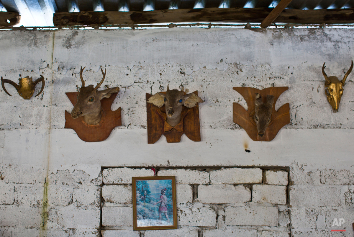 In this Oct. 2, 2015 photo, deer antlers mounted as hunting trophies hang inside the home of Carlos Sanchez, in Teloloapan, Mexico. In the spring of 2013, Sanchez was kidnapped and accused of stealing horses from a ranch in Teloloapan. But Sanchez was not a horseman. He liked hunting and cockfights. He said he had been to that ranch only to sell tacos to the masons who were building stables. By the end of the interrogation Sanchez was dead. (AP Photo/Dario Lopez-Mills)