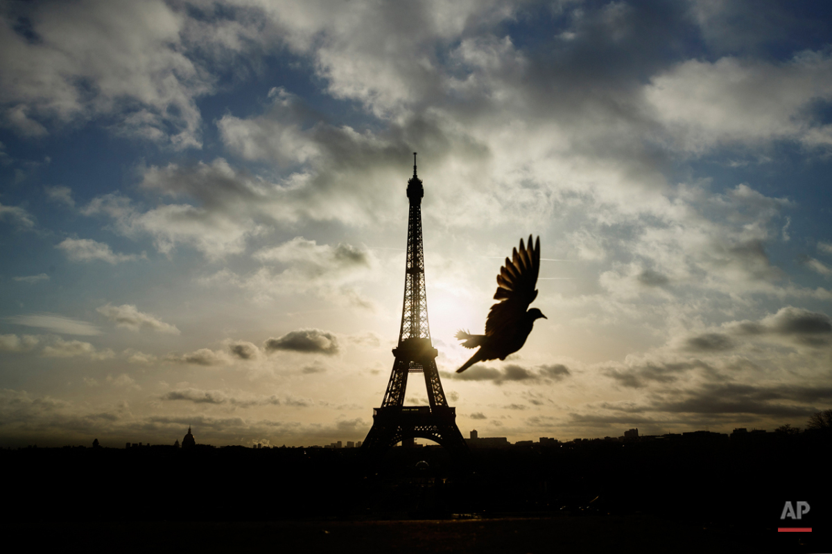 A bird flies in front of the Eiffel Tower ,which remained closed on the first of three days of national mourning,  in Paris, Sunday, Nov. 15, 2015. Thousands of French troops deployed around Paris on Sunday and tourist sites stood shuttered in one of the most visited cities on Earth while investigators questioned the relatives of a suspected suicide bomber involved in the country's deadliest violence since World War II.(AP Photo/Daniel Ochoa de Olza)