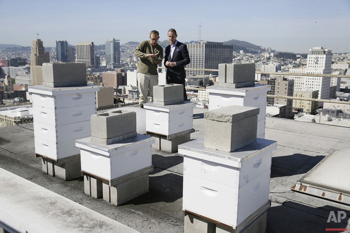 In this photo taken Monday, April 18, 2016, beekeeper Roger Garrison, left, and hotel general manager Michael Pace look over beehives on top of the Clift Hotel in San Francisco. (AP Photo/Eric Risberg)